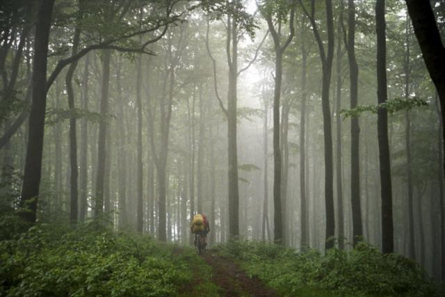 gespenstische Wälder im Zittauer Gebirge