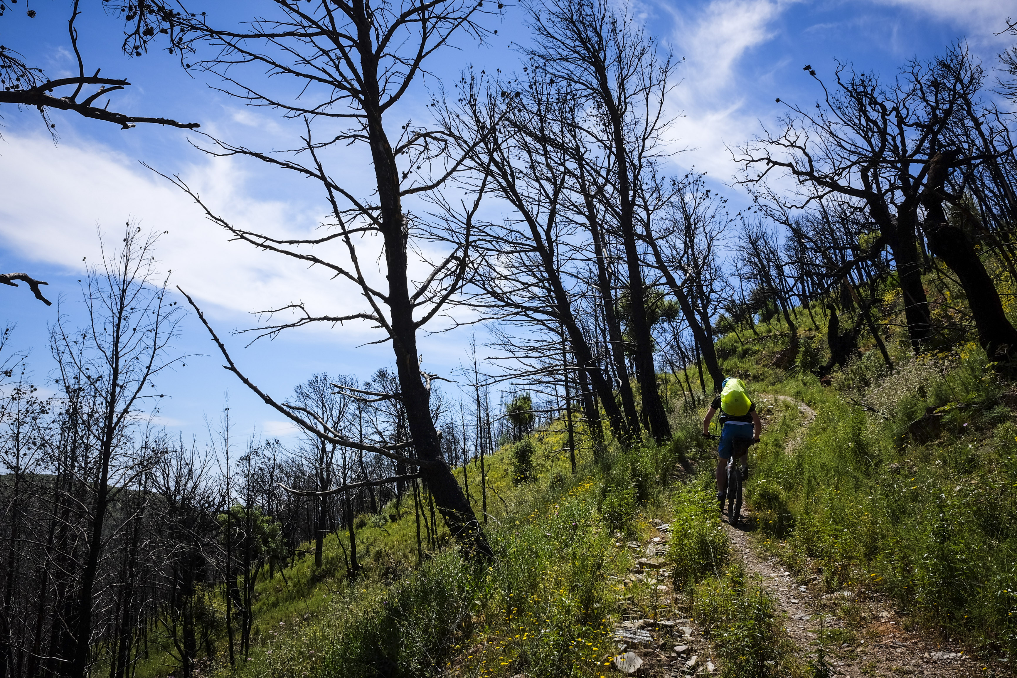 vom Feuer gezeichneter Wald