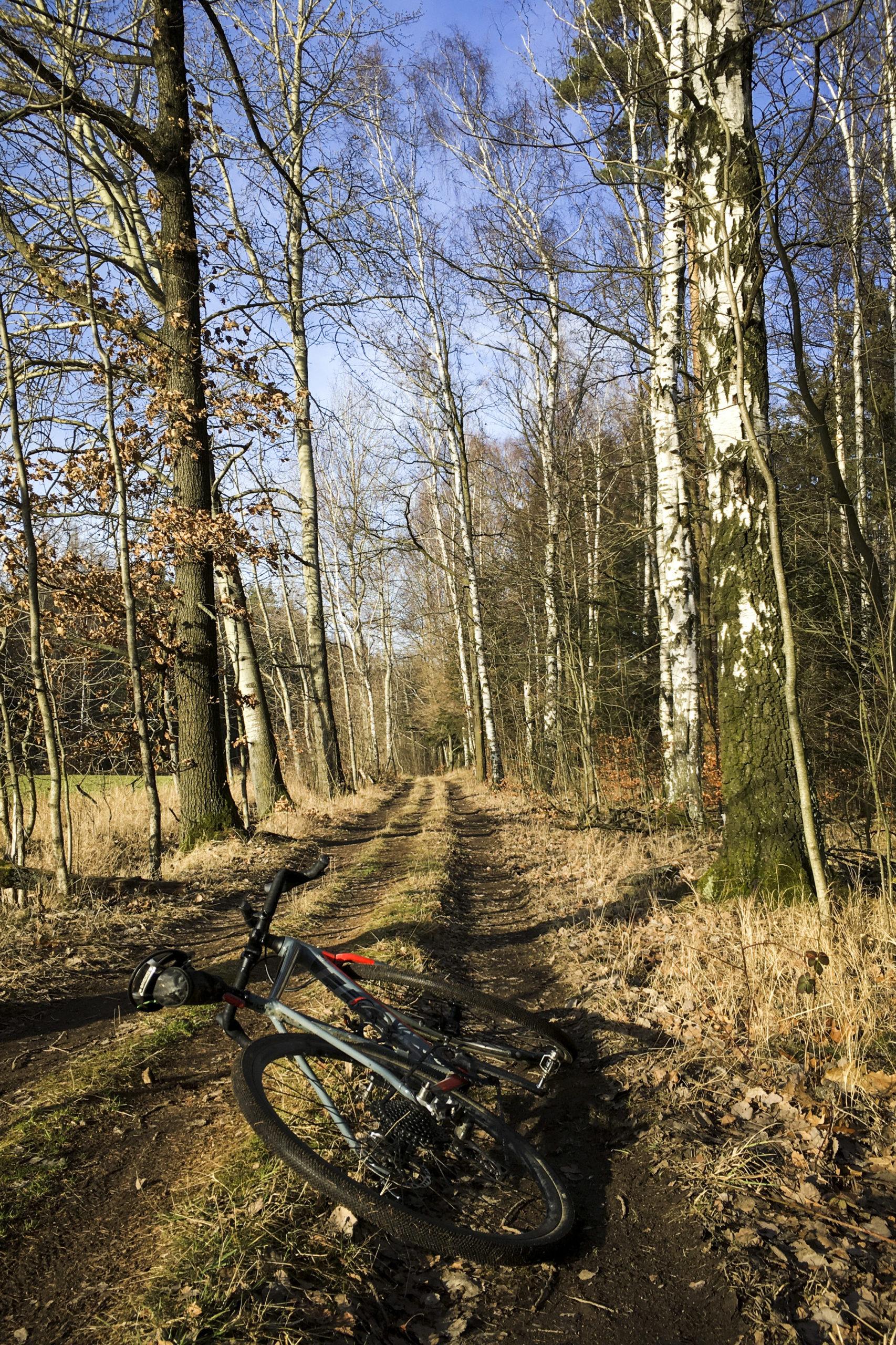 der Tharandter Wald lädt sehr zum graveln ein