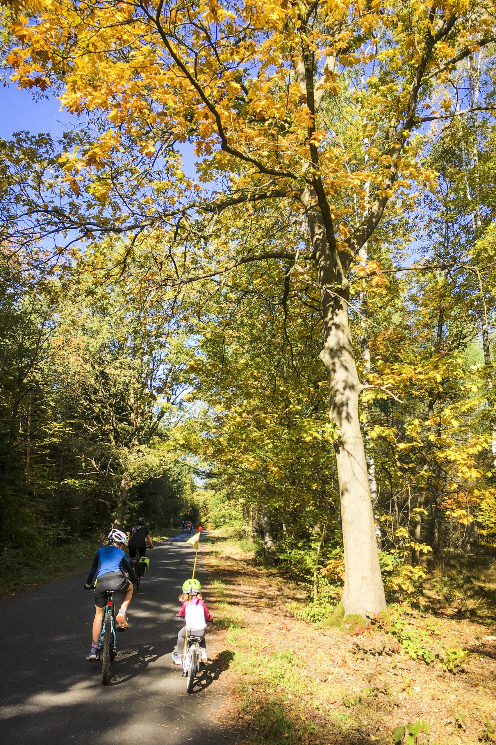 herrlicher Herbst in der Dresdner Heide