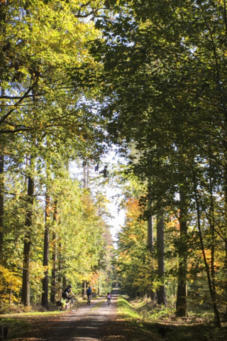 im Taucherwald