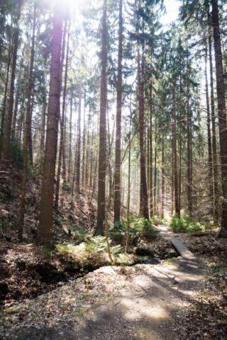 feiner Trail im Steingründchen