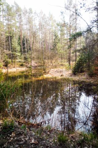 eine Teichidylle mitten in der Dresdner Heide