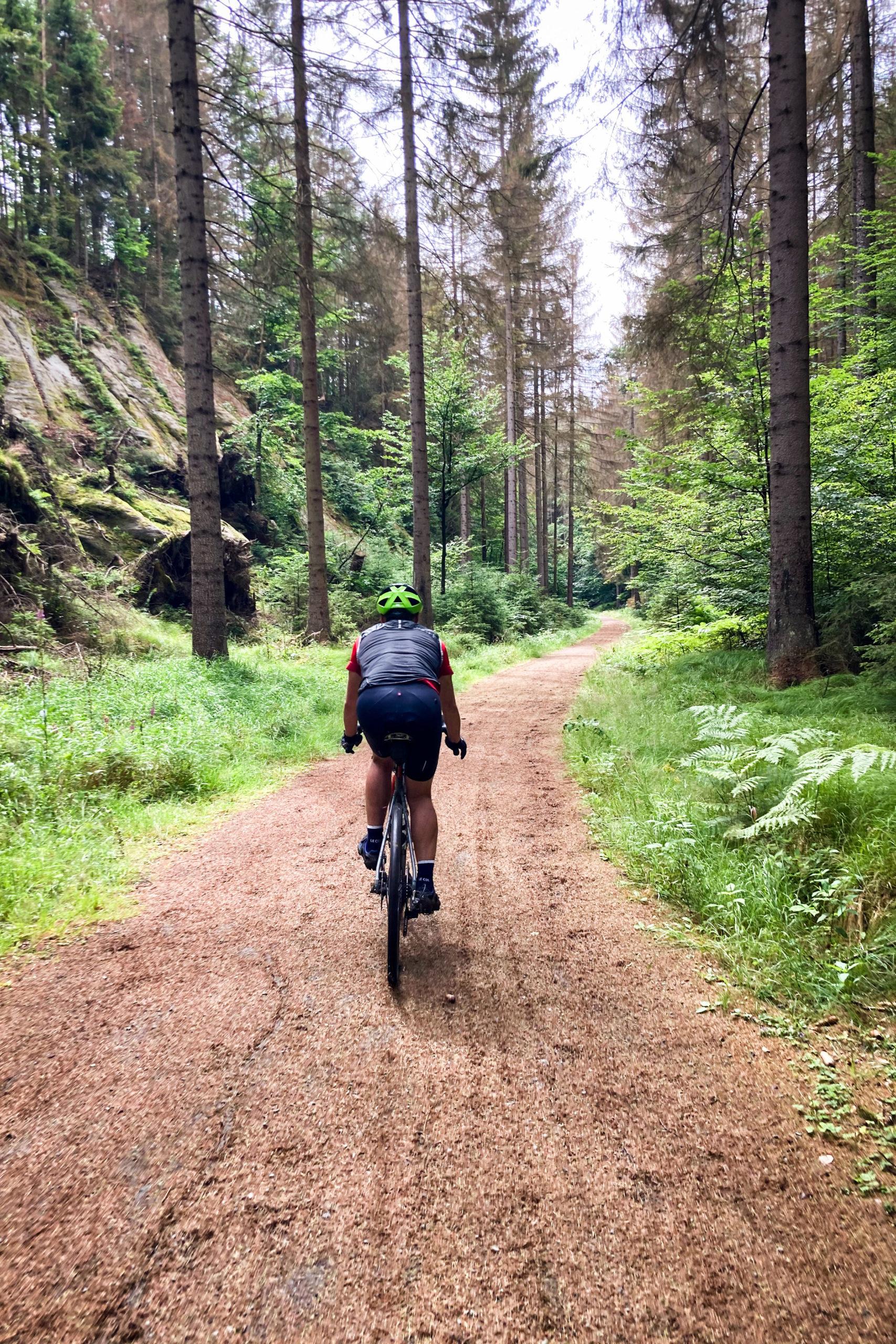 Ein Nadelteppich verdeutlicht die starken Waldschäden der letzten trockenen Sommer.