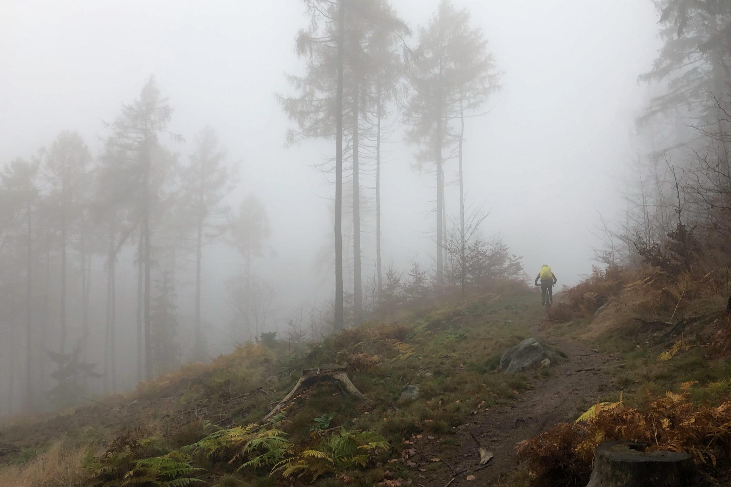 auf dem Aufstieg zum Hochwald